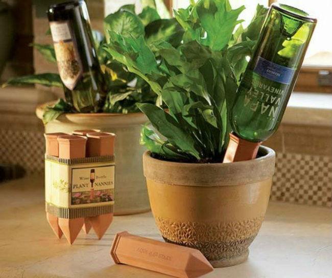 Vino reutilizar botella planta