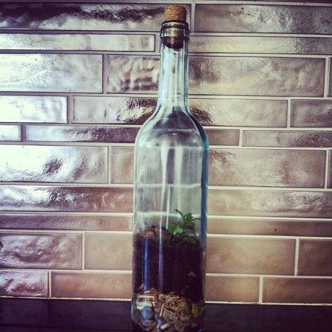 Vino reutilizar botella 3