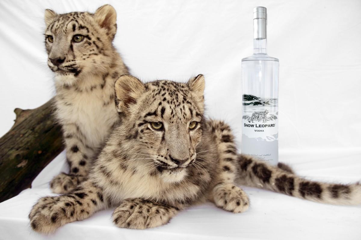 Snow Leopard, delicioso vodka para proteger una especie