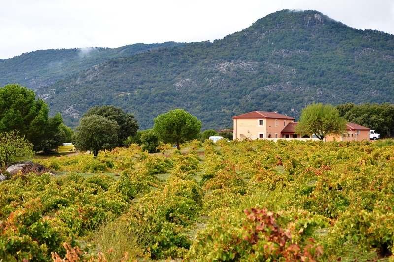 Vinos de Madrid incrementa su producción hasta los 3,5 millones de botellas en 2016