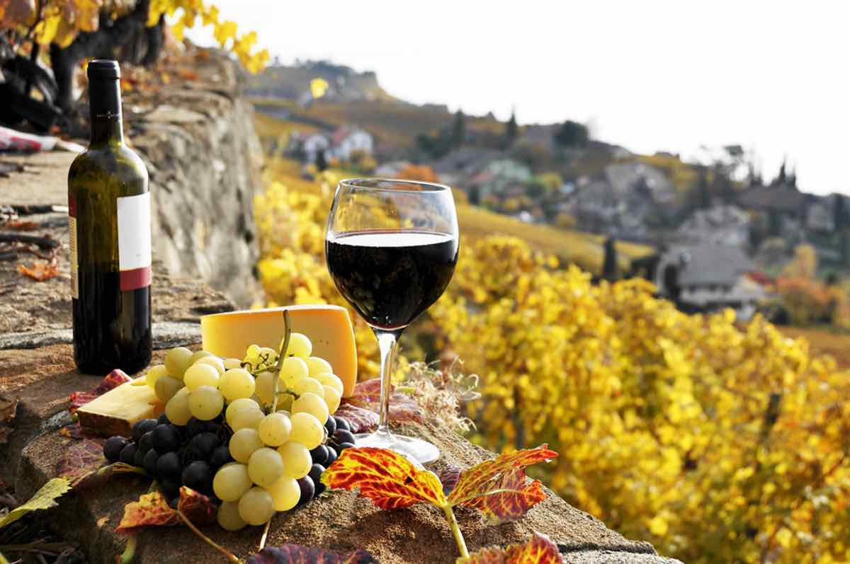 Italia, primer productor de vino del mundo, podría reducir su cosecha hasta un 30% en 2017