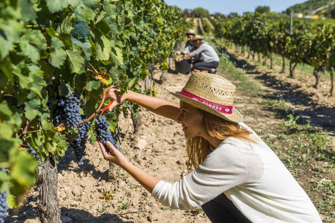 Bodegas Torres gana por tercer año el premio 'Best Wine Experience' con 'De la cepa a la copa'
