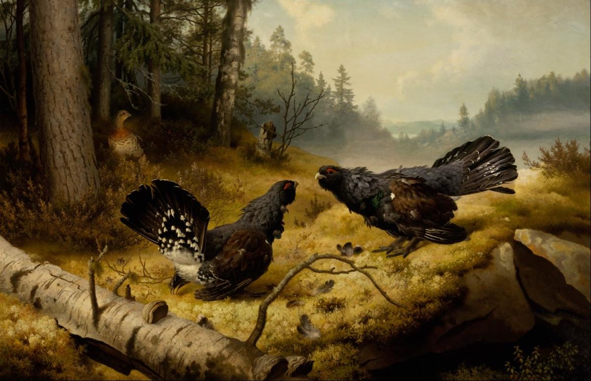 The Fighting Capercaillies (1886), de Ferdinand von Wright