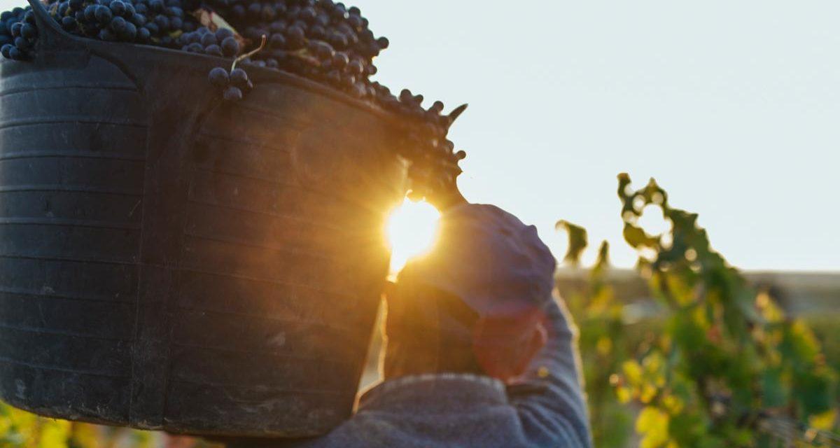 El Consejo Regulador de la DOCa Rioja anuncia un paquete de ayudas a viticultores y bodegas