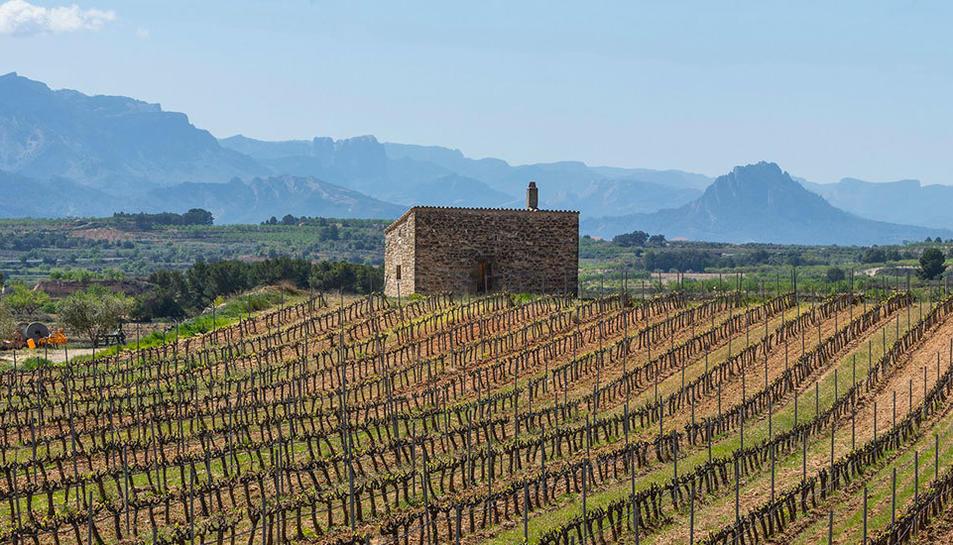 DO Terra Alta adopta medidas extraordinarias para ayudar a bodegas y viticultores con el coronavirus