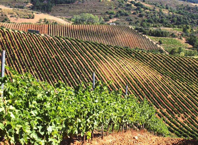 El Gobierno anuncia plan de choque de 85,9 millones de euros para apoyar al vino español por la crisis del covid-19