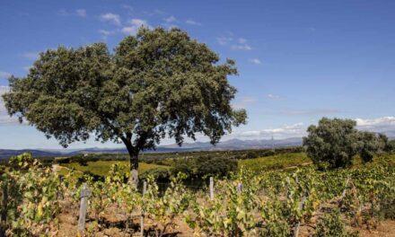 Madrid se suma a las Rutas del Vino de España, que pasa a contar con  32 destinos enoturísticos