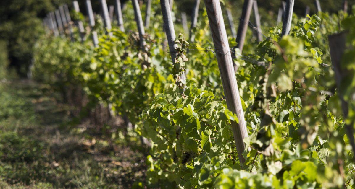 Moët Hennessy se une al movimiento de transición agroecológica