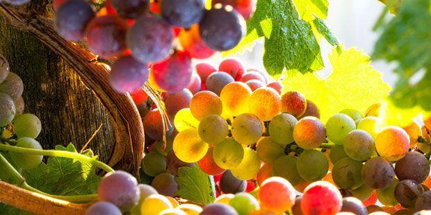 Aumenta el valor de espumosos y vinos, según Market Trends