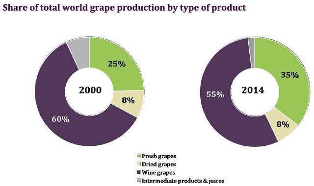 wine_grapes_2
