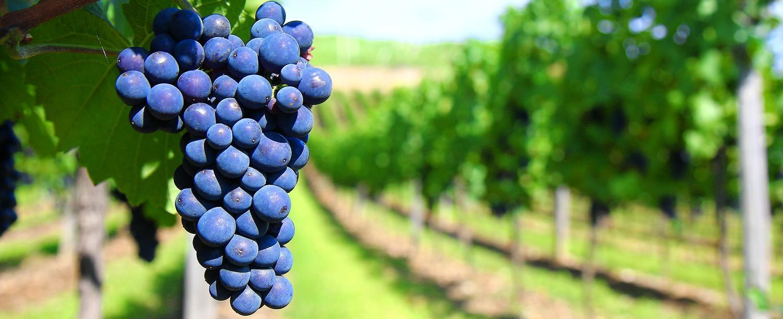 """Forbes publica """"Diez grandes vinos aptos para todos los bolsillos"""""""