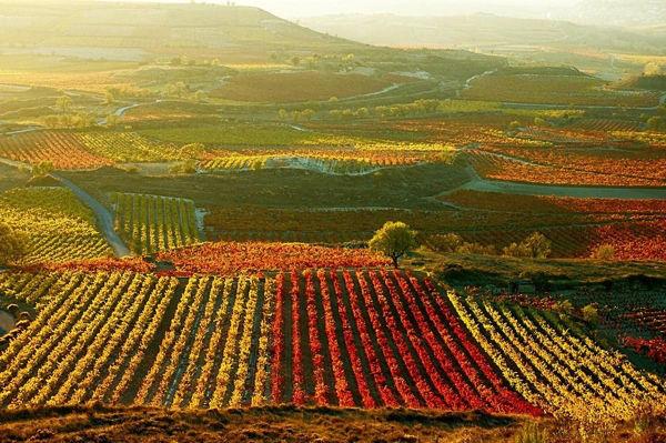 España, primer vendedor mundial de vino en el primer trimestre de 2014